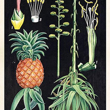 Poster, 18x24 cm, Ananas