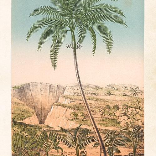 Poster, 35x50cm Palm från Sköna Ting