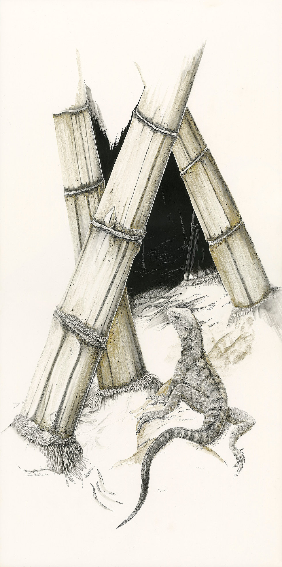 Common bamboo, Eastern Water Dragon, The path of the dragon, Art by Eva Richards, Brisbane, Botanical Artist, Silverpoint