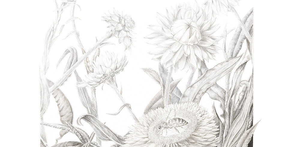 WORKSHOP FULL- Using Graphite and Coloured Pencils-