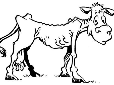 Πώς φτάσαμε από τις χοντρές στις ισχνές αγελάδες.
