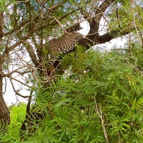 Safari Wildlife Tours