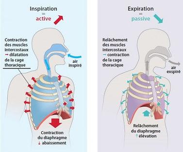 Ostéopathie et respiration