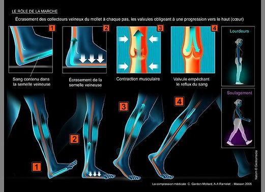 La physiologie de la marche