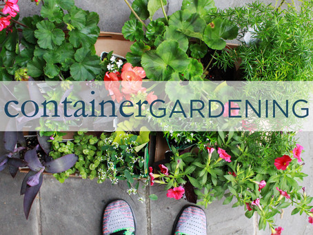 Gardening 101 | Containers