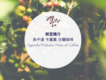 烏干達 卡塞塞 日曬咖啡