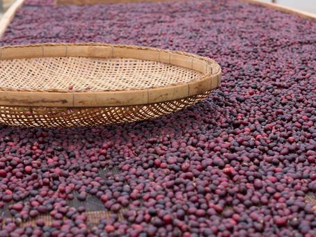 Uganda Kasese Mubuku Natural Coffee