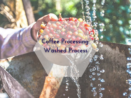 Coffee Processing: Washed Process