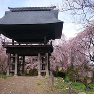 波田町安養寺の桜