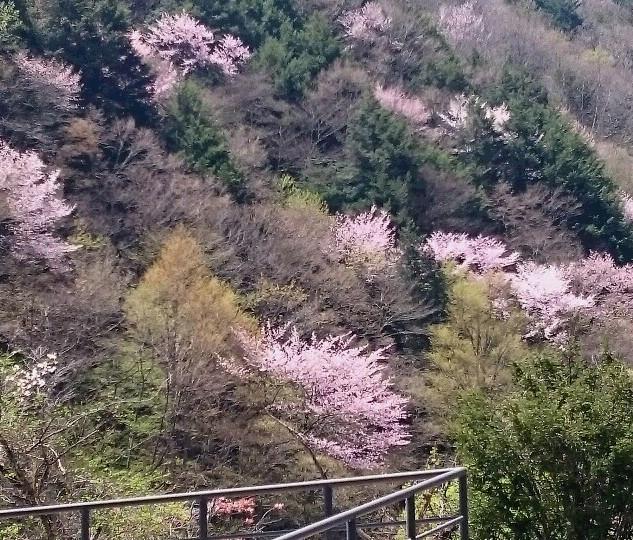山桜 周辺の山々
