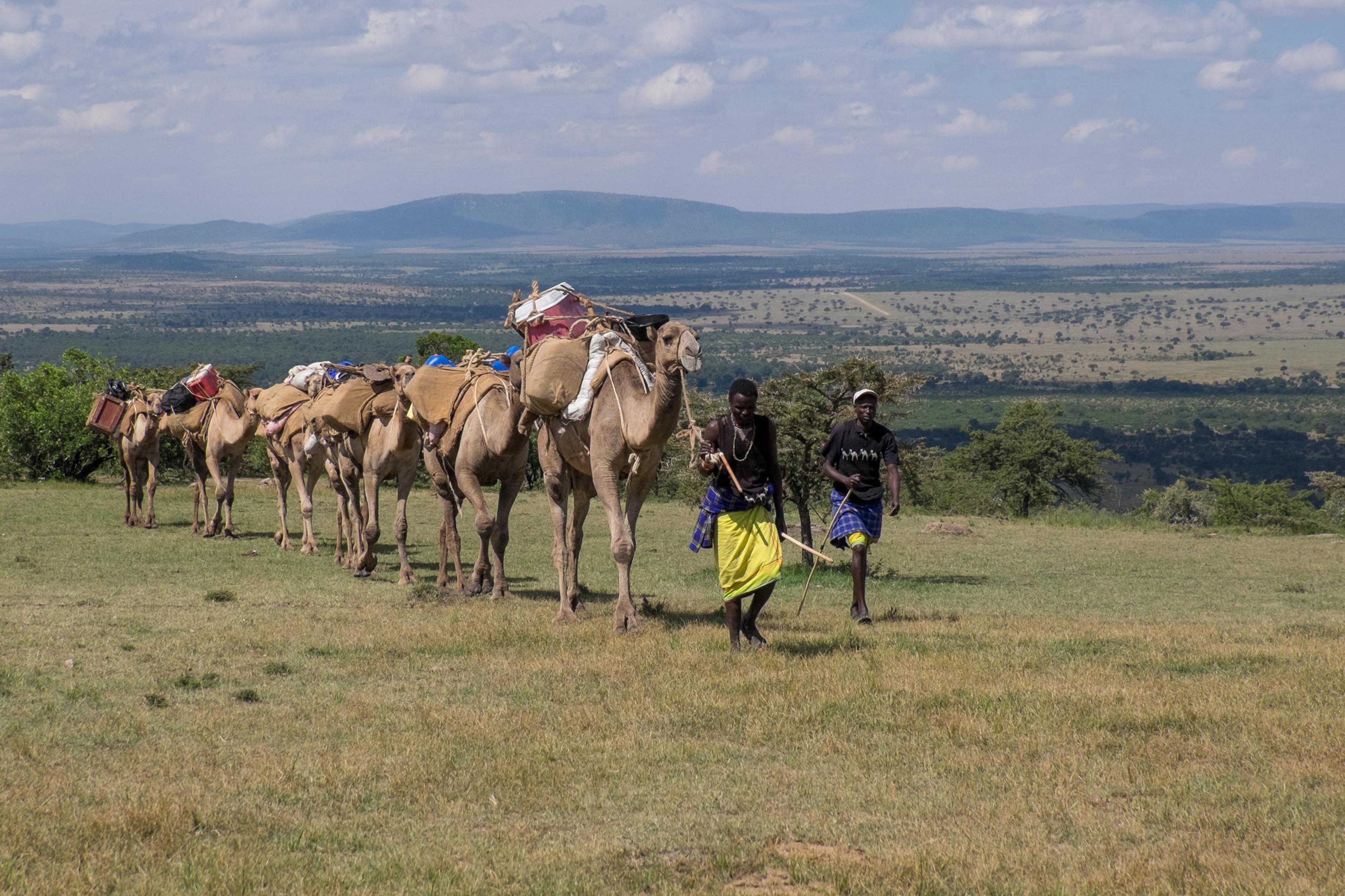 Camel Walking Safaris