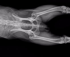 Affordable Veterinary Digital X-ray
