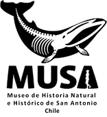 LOGO MUSAa.png