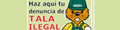 BANNER-denuncia-tala_ilegal_conaf.jpg