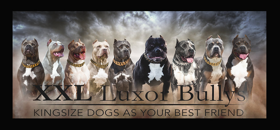 XXL Luxor Bullys
