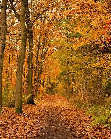 yellow:orange forest.jpg