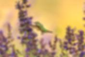 humming bird spring andrea-reiman-304108