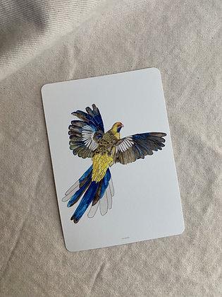 Postkarte Papagei | APRIL FIRST X ZERCKSTYLE