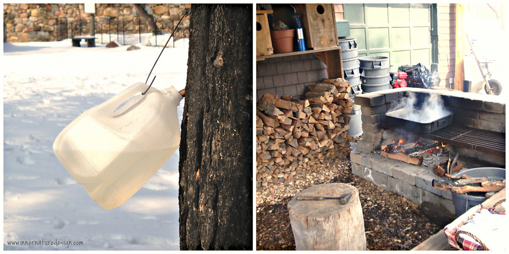 Inner Nature Design | Maple Sugaring