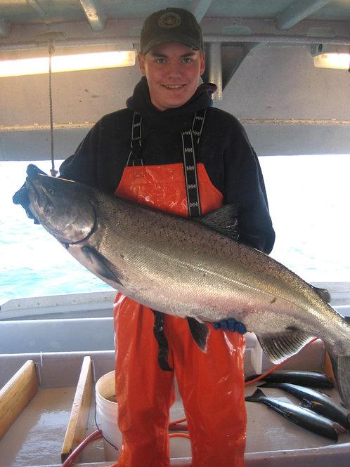 King Salmon 12 Lb