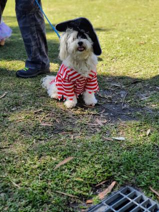 My K999 Dog Behaviour/ Training