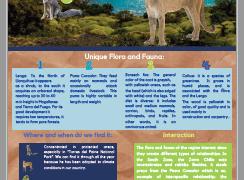 Magallanes. Flora & Fauna