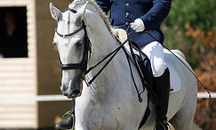 dressage-horse-2.jpg
