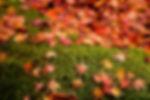 秋の恵み いちご狩り 黒豆枝豆狩り 新さんだ農園 いな岡