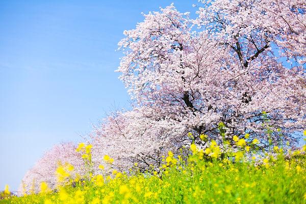 春の恵み いちご狩り 黒豆枝豆狩り 新さんだ農園 いな岡