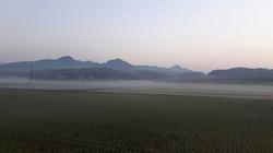 兵庫、神戸、三田盆地の朝霧 いちご狩り 新さんだ農園 いな岡