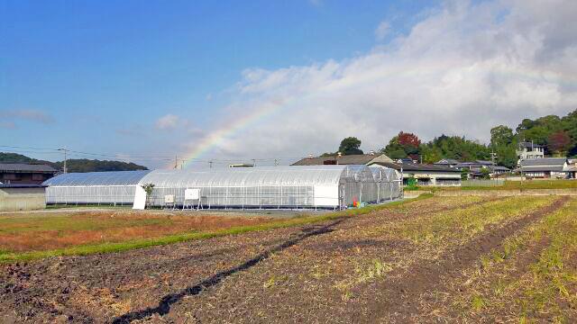 神戸三田、新さんだ農園温室 虹がかかる いちご狩り 新さんだ農園 いな岡