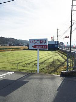 神戸三田、いちご狩り、新さんだ農園 いな岡_指差