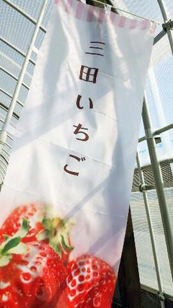 神戸三田 いちご狩り 新さんだ農園 いな岡 案内のぼり