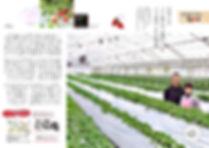新さんだ農園 いな岡、いちご狩り記事、JA兵庫六甲1月号に掲載、中ページ