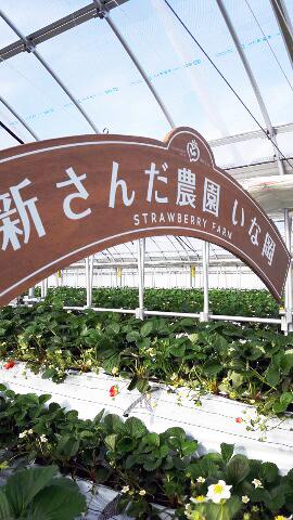 神戸三田、さんだ農園 いな岡 いちご狩り 歓迎看板
