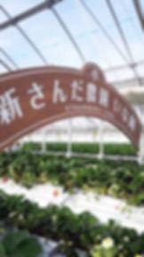 神戸三田、新さんだ農園 いな岡のいちご狩りハウスの記念写真用アーケード
