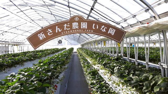 神戸三田、新さんだ農園 いな岡 いちご狩り 歓迎看板