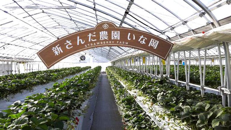 神戸三田、新さんだ農園いな岡、ハウス内看板
