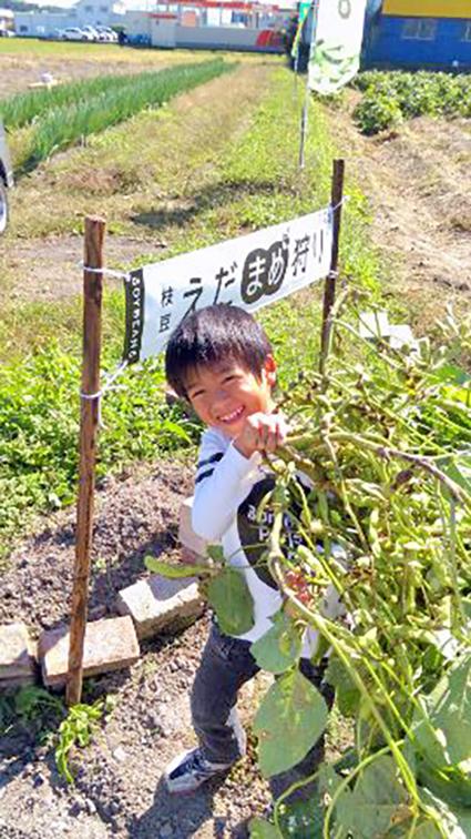 黒豆枝豆狩りを楽しむ子供