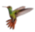 hummingbird_PNG89.png