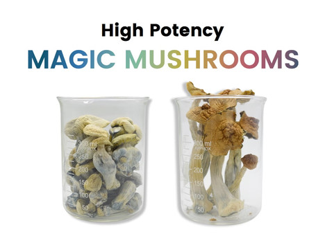 mushrooms with text updated gradient 2-min.jpg