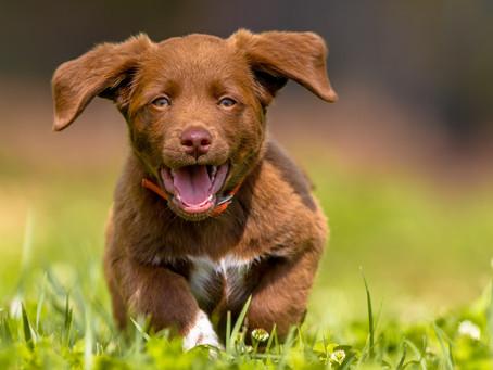 6 básicos que debes saber para correr con tu perro