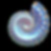 Sea Shells_edited.png