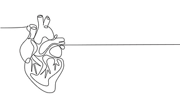 one-continuous-line-drawing-anatomical-h