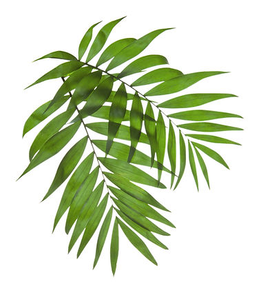 Palm%20Tree%20Leaves_edited.jpg