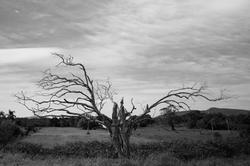 CZ37 - Cahique Lahgiz - 075x100 - Fotogr