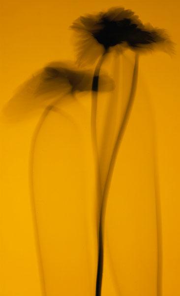 BB6 - Bill Beckley - Dervish 6 [2009] 04