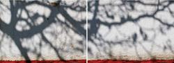 LR13_-_Leonardo_Ramadinha_-_Red_carpet_0