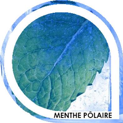 MENTHE POLAIRE - Menthe extra fraiche