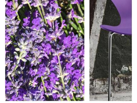 Lavendel - Farbakzent